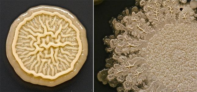 bacterie-main-enfant-2