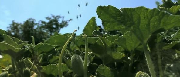 reproduction-plante-
