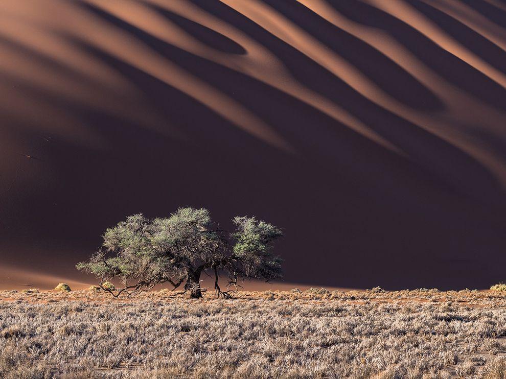 Dans le désert de Namibie par Stas Bartnikas
