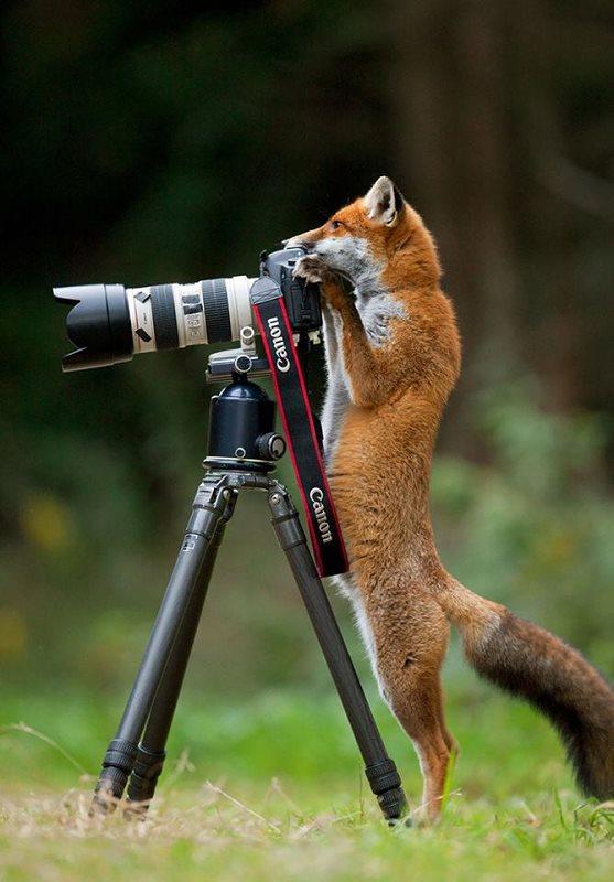Photographie-animaliere-13