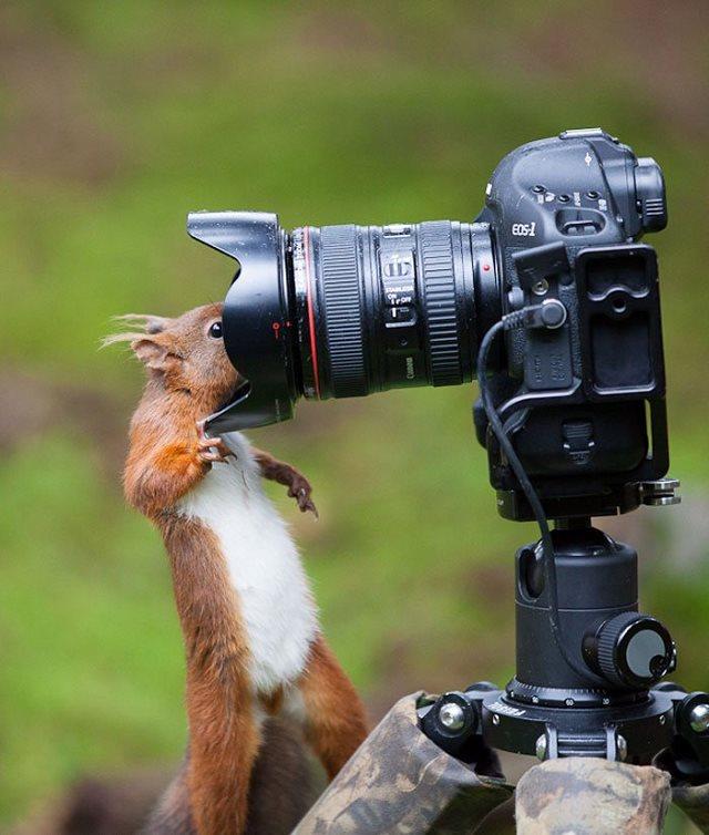 Photographie-animaliere-14