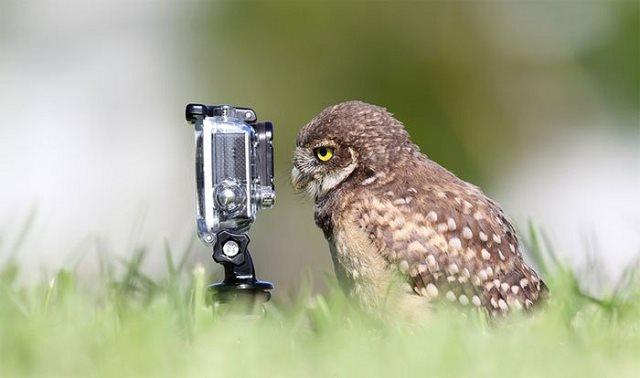 Photographie-animaliere-15