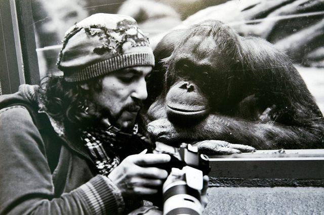 Photographie-animaliere-18