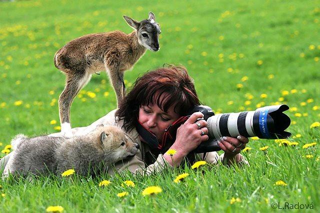 Photographie-animaliere-28