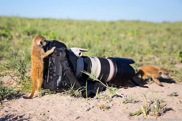 Photographie-animaliere-3
