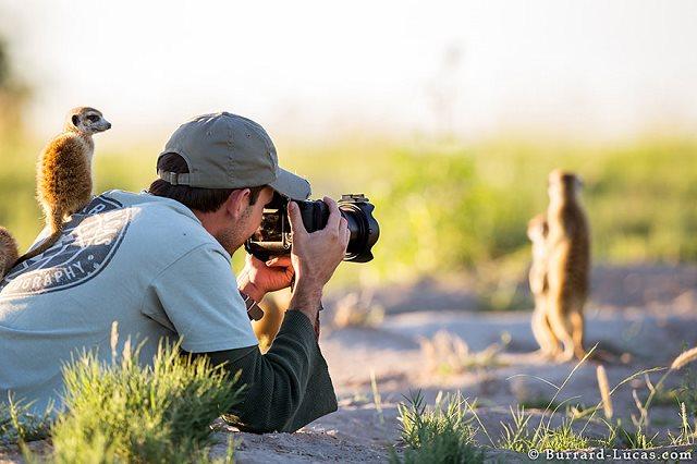 Photographie-animaliere-33