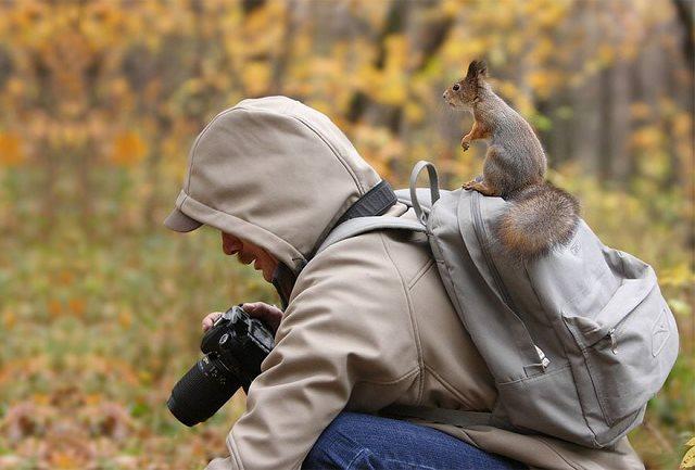 Photographie-animaliere-36