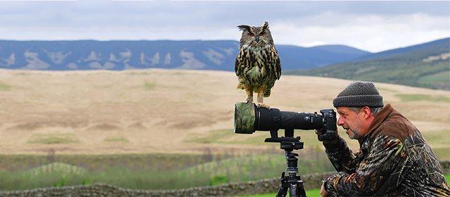 Photographie-animaliere-38
