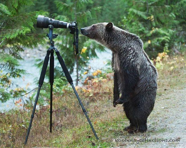 Photographie-animaliere-4