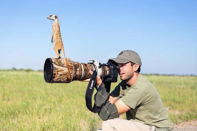 Photographie-animaliere-5