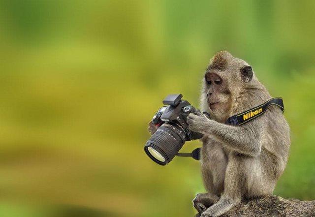 Photographie-animaliere-9
