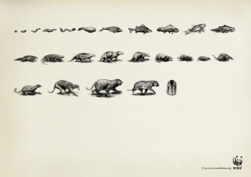 Affiche-WWF-cop211