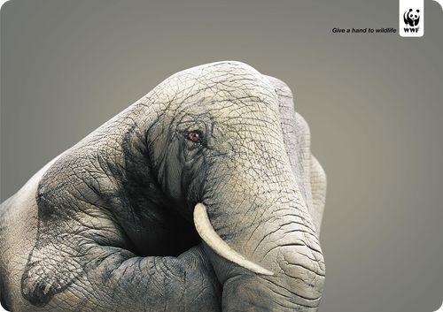 Affiche-WWF-cop217