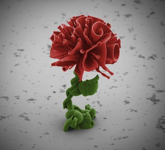 Nanotechnologie-chimiques-Fleur-1