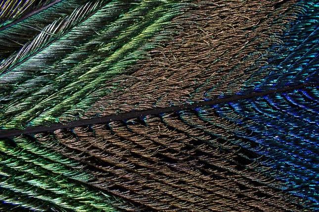 plumes-oiseau-Zoom-Microscope-4