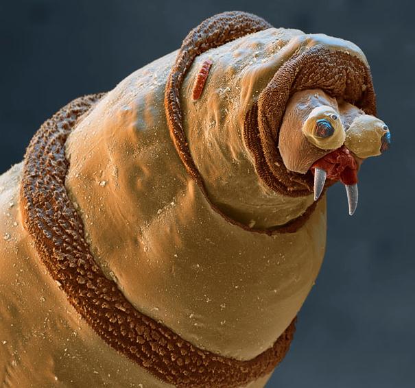 Insectes au Microscope électronique