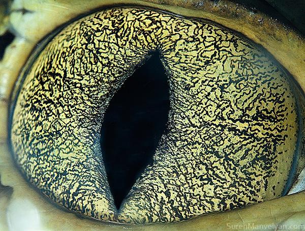 yeux des animaux