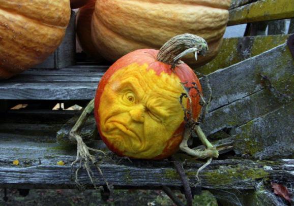 Les citrouilles sculptées pour Halloween