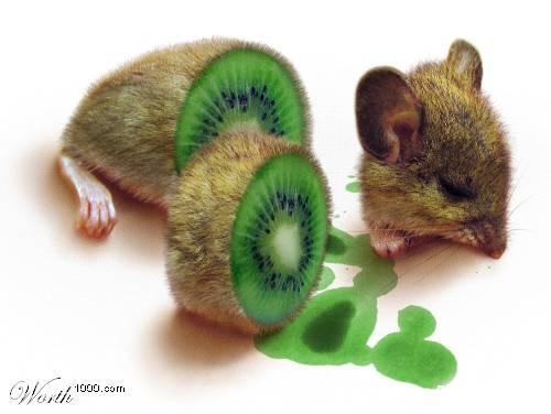 Photomontages à partir d'animaux