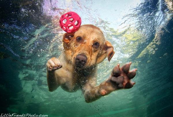 chien-piscine-12