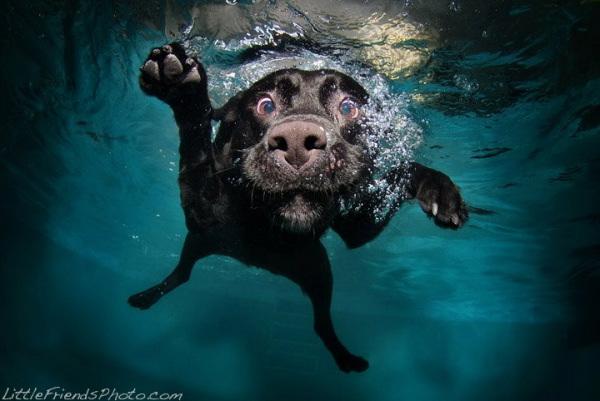 chien-piscine-13