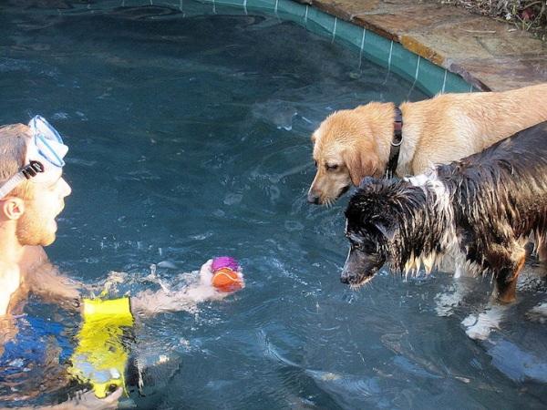 chien-piscine-14