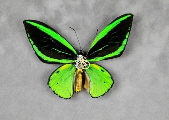 insectes mécanisés