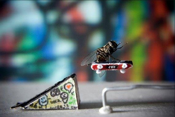mouches mises en scène