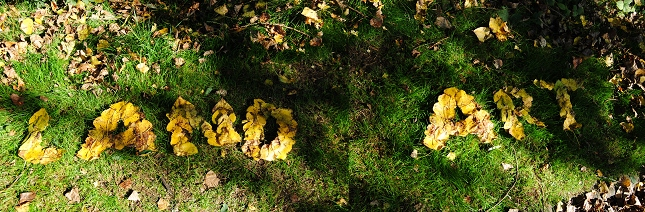 Land-Art-Nature-Feuille-4