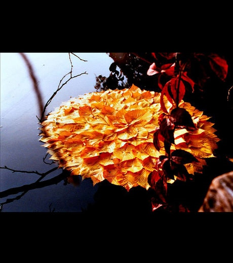 Land-Art-Nature-Feuille-9