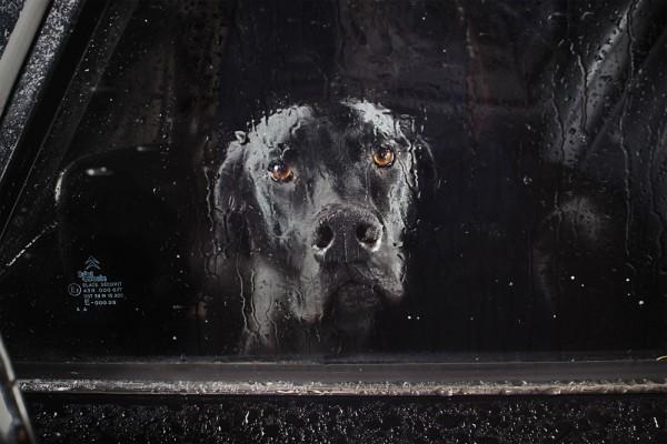 portraits chiens