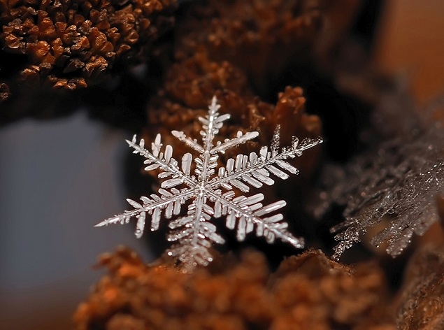 flocons de neige à la loupe
