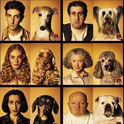 Les chiens et leurs propriétaires