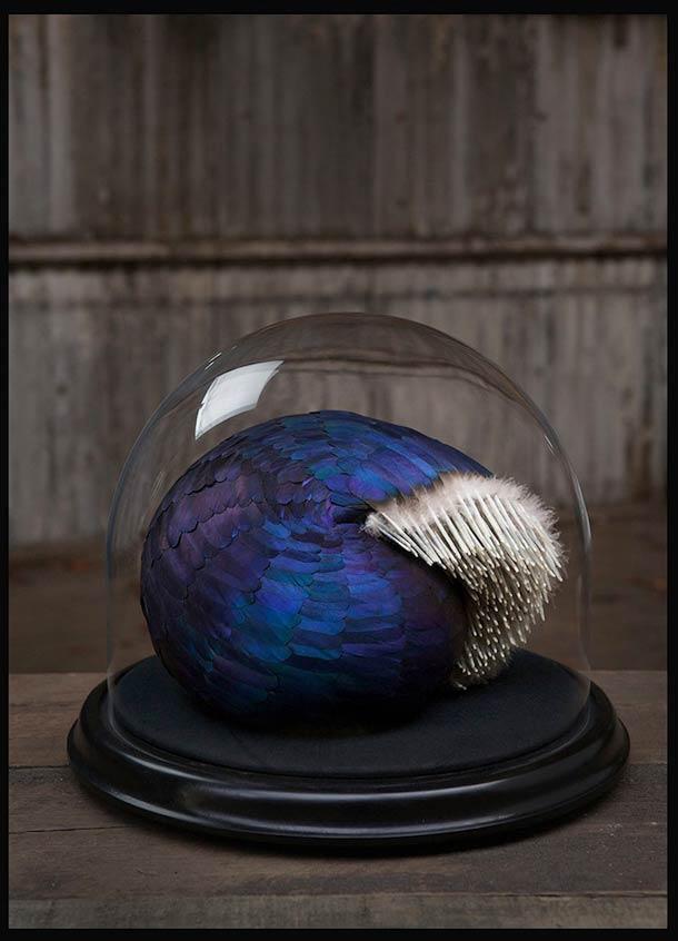Art-plume-canard-pigeon-10