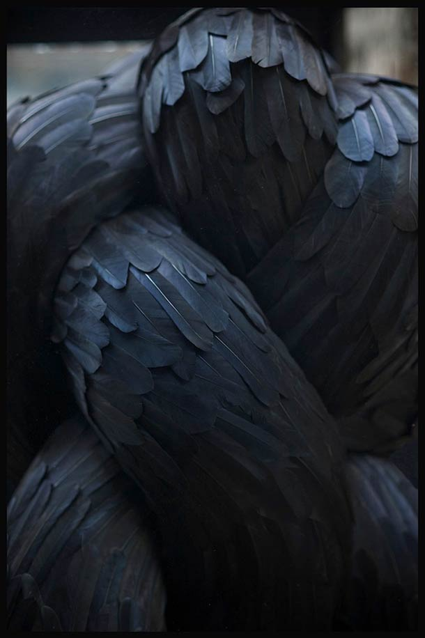 Art-plume-canard-pigeon-6