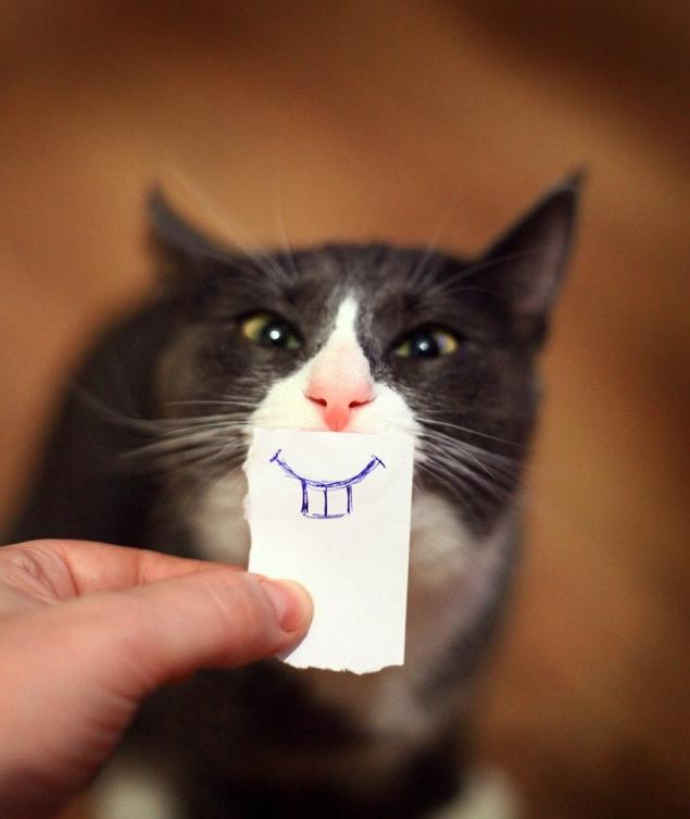 un souricat