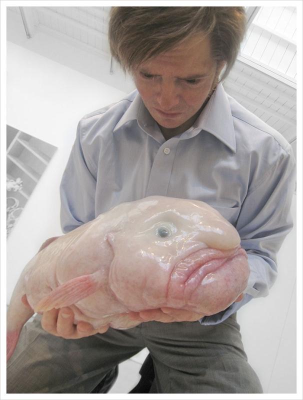 Le Blobfish - Un charmant poisson gélatineux