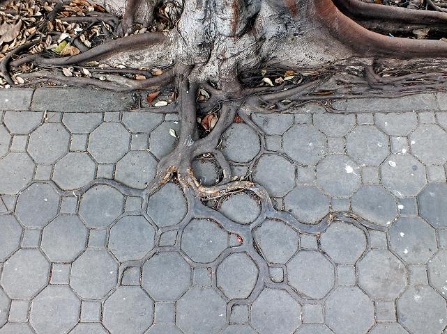 Adaptive roots in the concrete jungle par Horst Kiechle