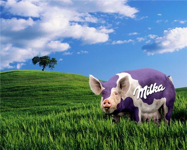 cochon milka
