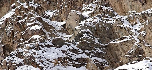 camouflage-mimetisme-léopard-des-neiges-