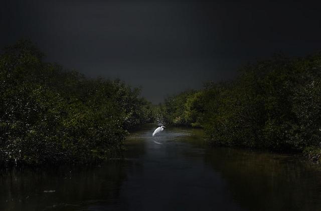 Paysage/ Paysage marin/ Nature: Héron