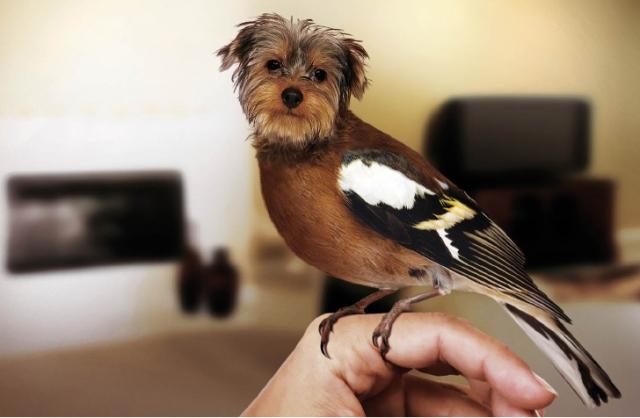 image-photoshop-chien-oiseau-4