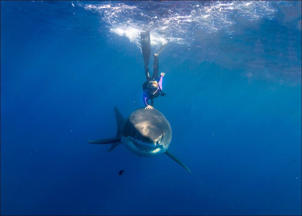 nager-avec-requin