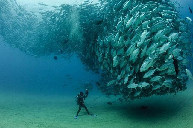 poissons-tornade-1