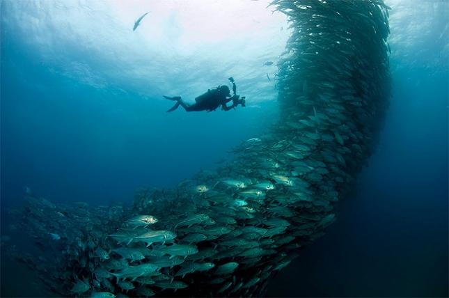 poissons-tornade-2