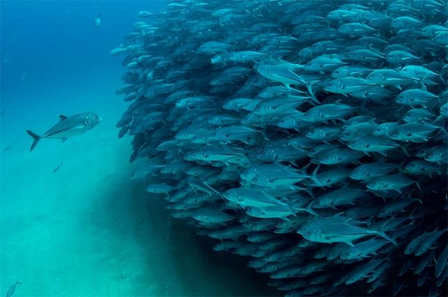 poissons-tornade-3