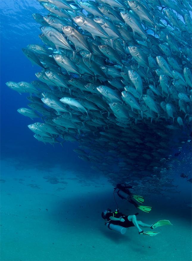 poissons-tornade-4
