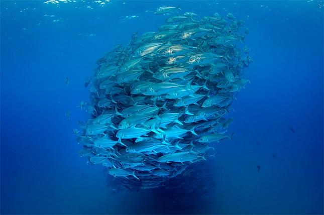 poissons-tornade-6