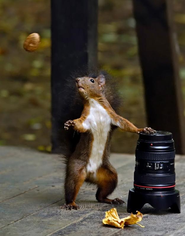 photo-humour-drole11