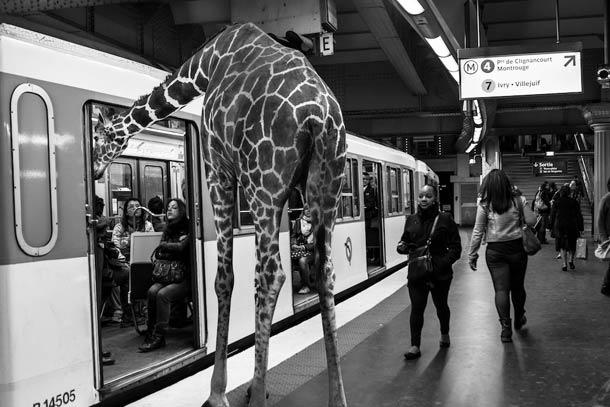 faune-urbaine-7